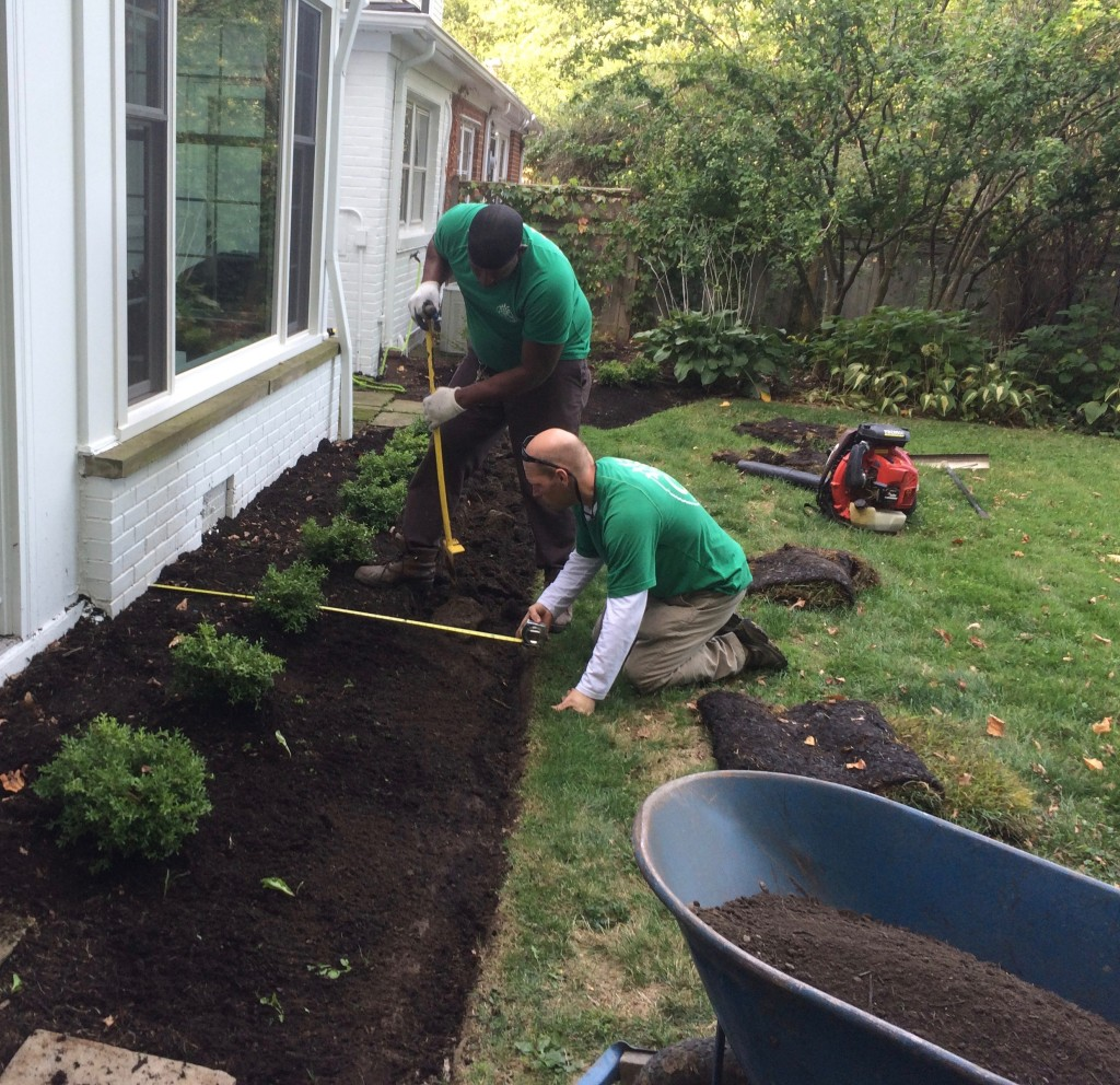 Planting a row of Boxwood in Cleveland Heights