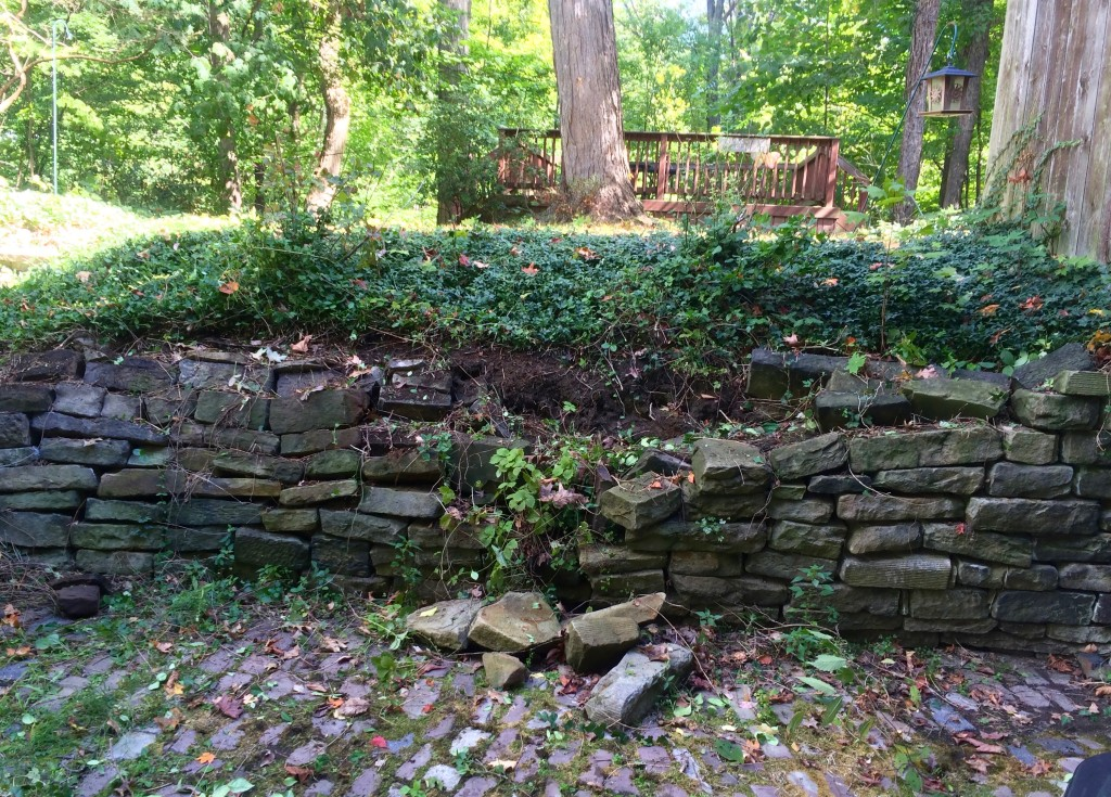 Ivy and unwanted vegetation removed. Retaining wall stones falling apart.