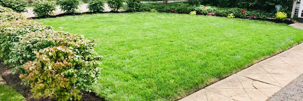 Regular Lawn Mowing Service